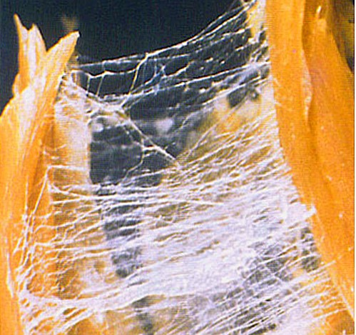 390-A-day-with-Jaap-van-der-Wal-2015-EN